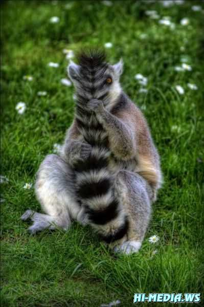 37 фото забавных животных (Фотоподборка 02) 2012