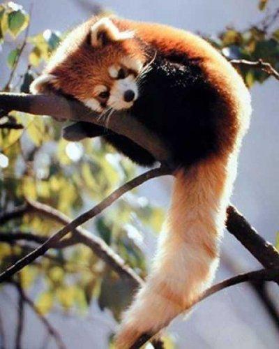 30 фото забавных животных (Фотоподборка 01) 2012