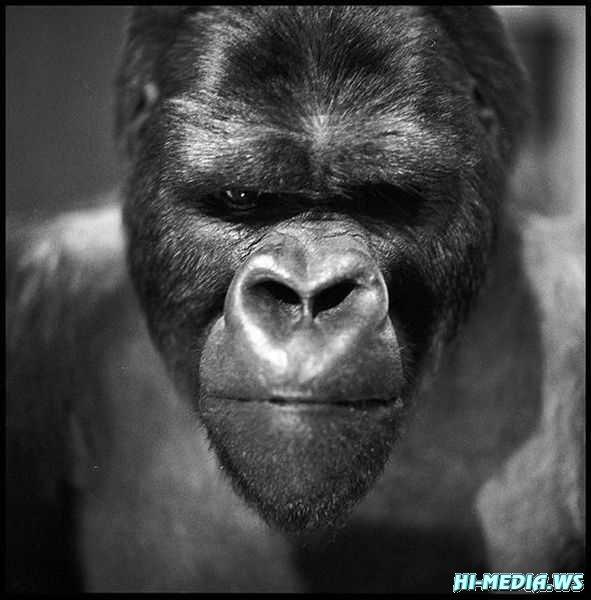 39 фото забавных животных (Фотоподборка 03) 2013
