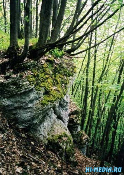Галичья гора
