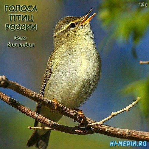 Звуки природы: Голоса птиц России (800 видов) (2012-2015)