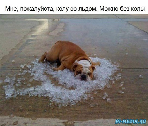 20 изображений, которые докажут, что вы вряд ли знаете, что такое настоящая жара