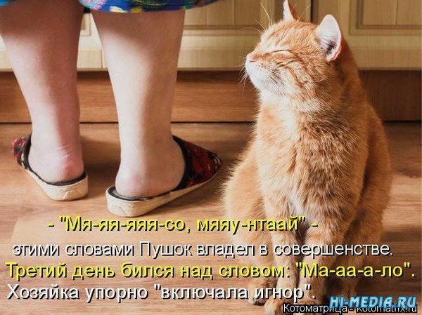В день кошек - новая подборка котоматриц