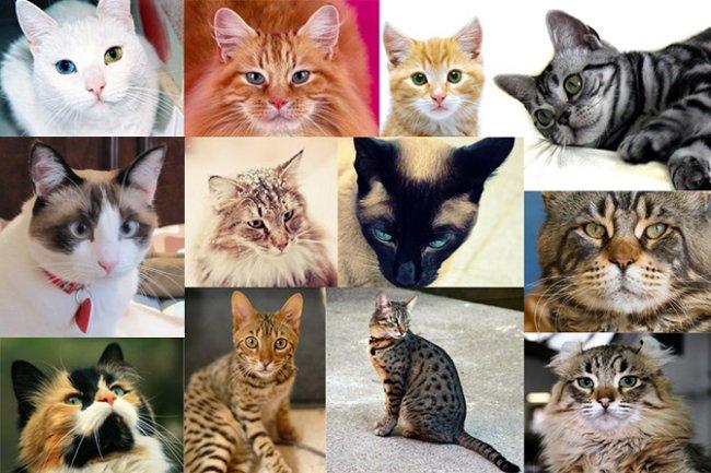 Самые красивые породы домашних кошек