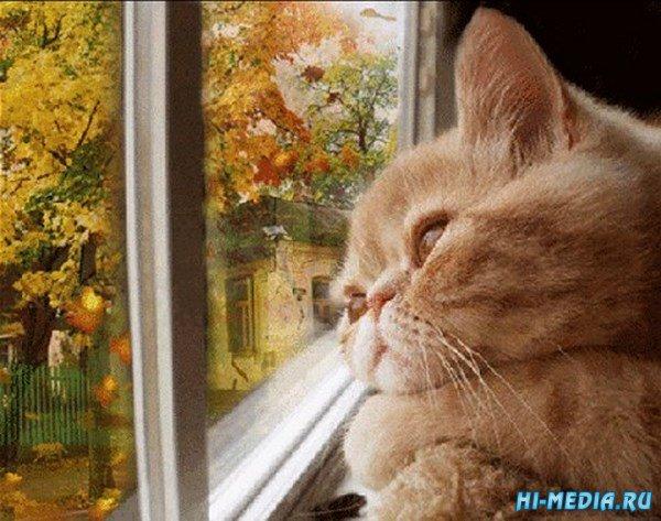 Осенний день (Музыкальная flash-открытка)