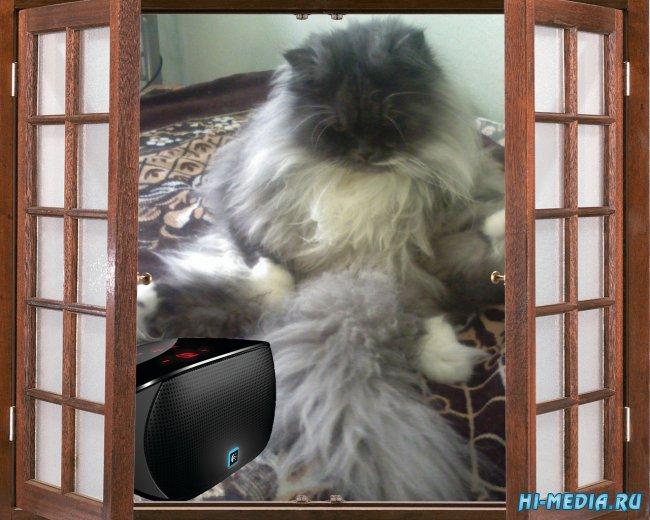Кошки (Музыкальная flash-открытка)