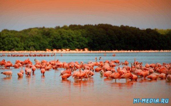 Удивительное Розовое озеро на Юкатане