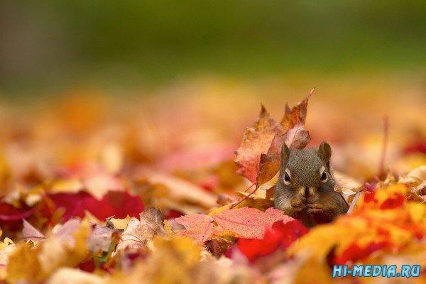 И станет осень под окном... (Музыкальная открытка)