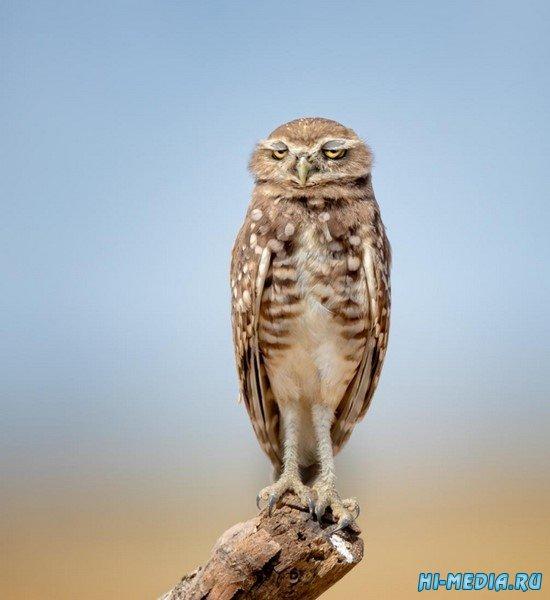 Итоги конкурса комедийной фотографии животных в дикой природе 2021 года